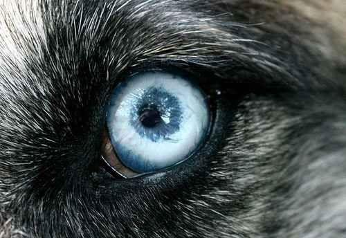pupila-redonda