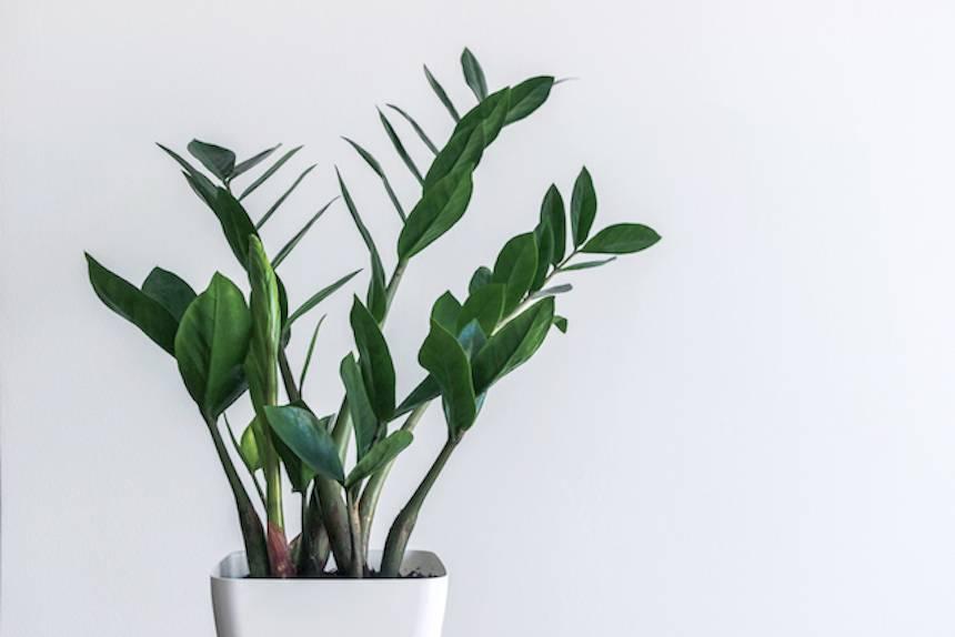 planta de la eternidad