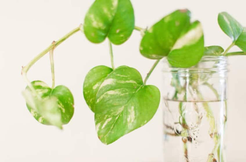 poto de neón plantas