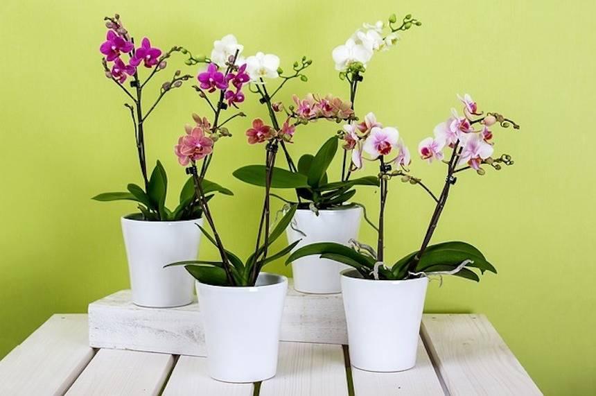 orquídeas en el baño