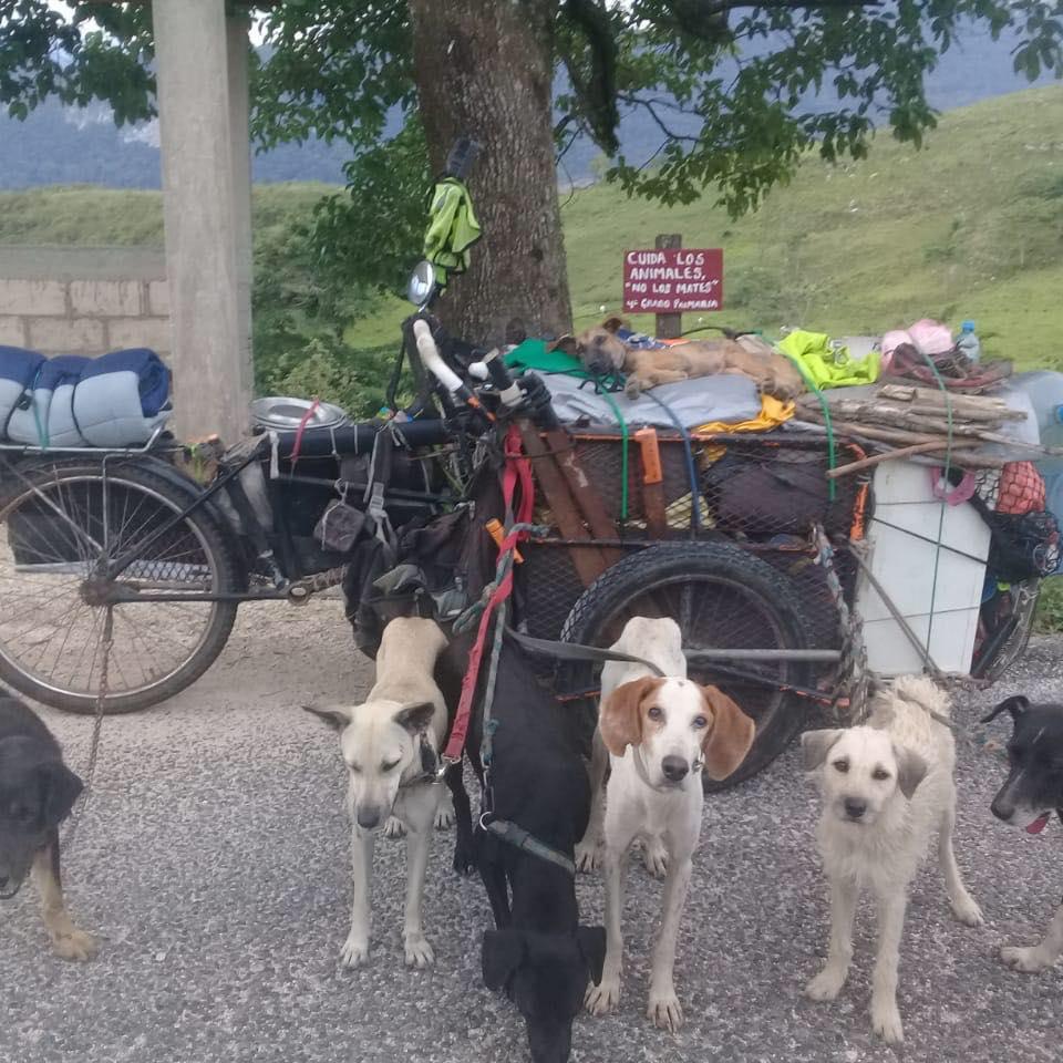 Seguidores perros