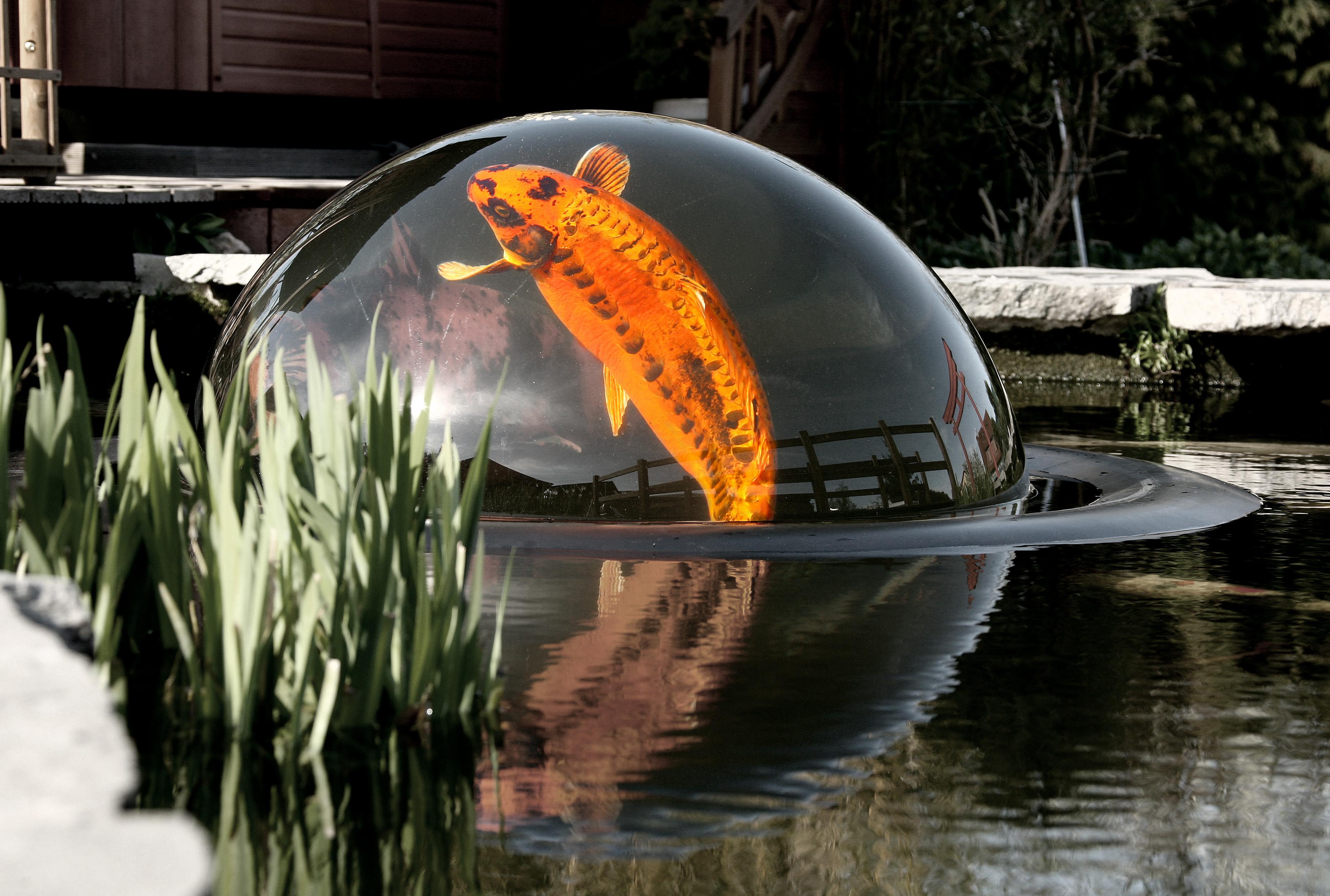 acuario con peces en el patio o jardín