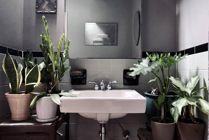 plantas de baño