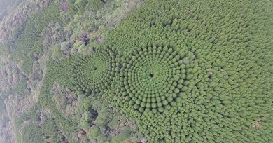 campos-circulares-obi-japon-arboles