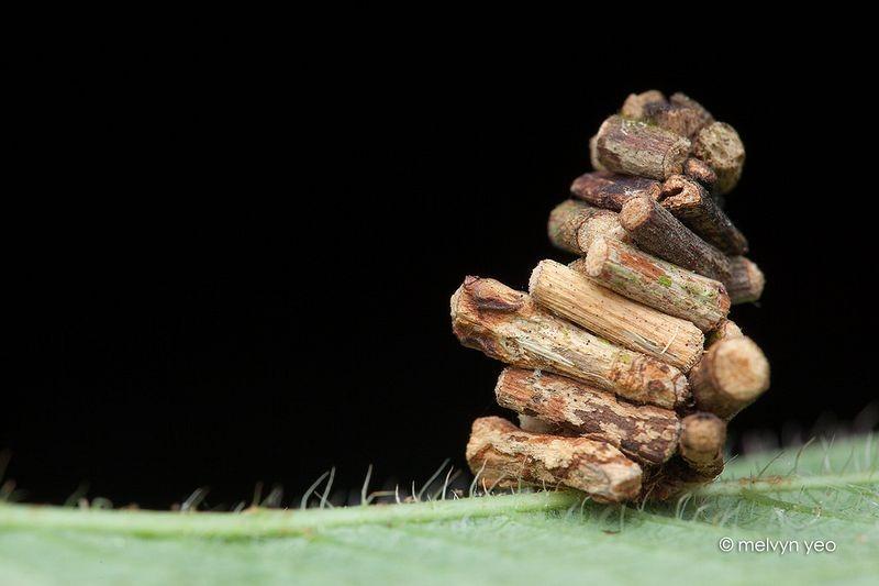 oruga saco troncos