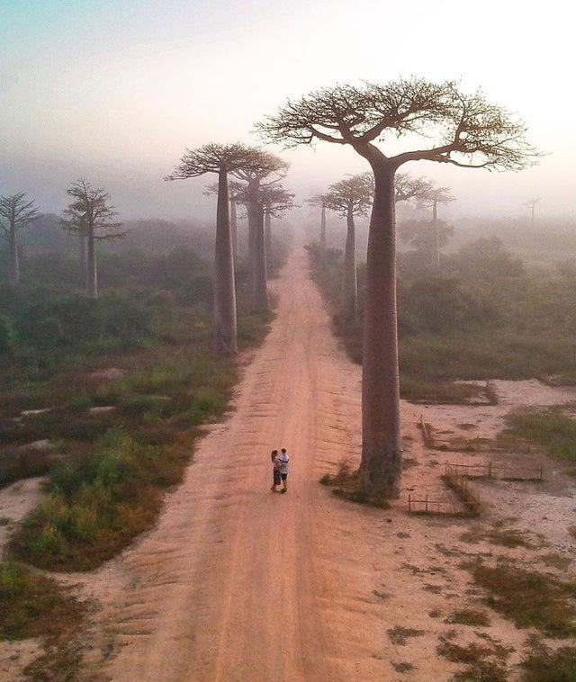 Madagascar Avenida de los Baobabs