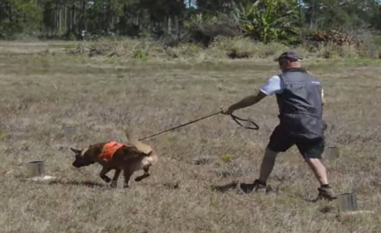 perros entrenados para encontrar bacterias en cítricos