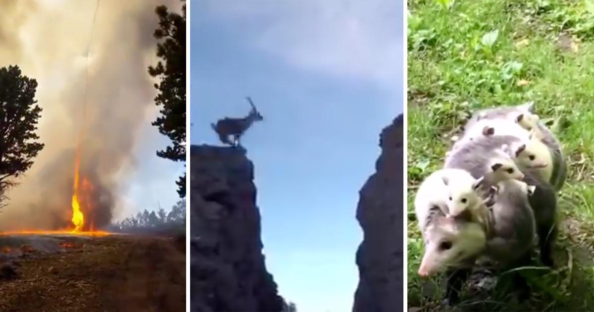 videos-naturaleza