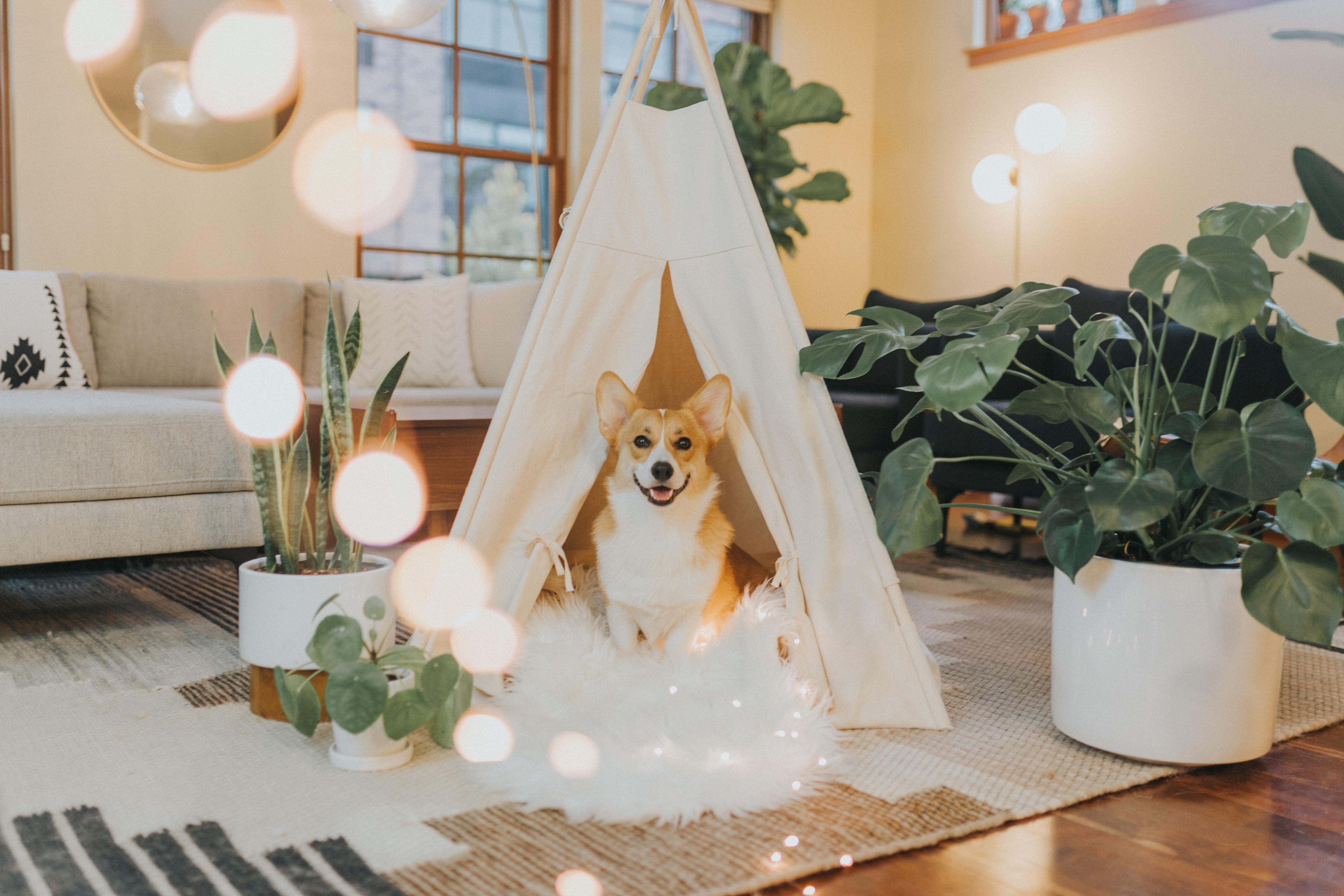 perro activo en casa