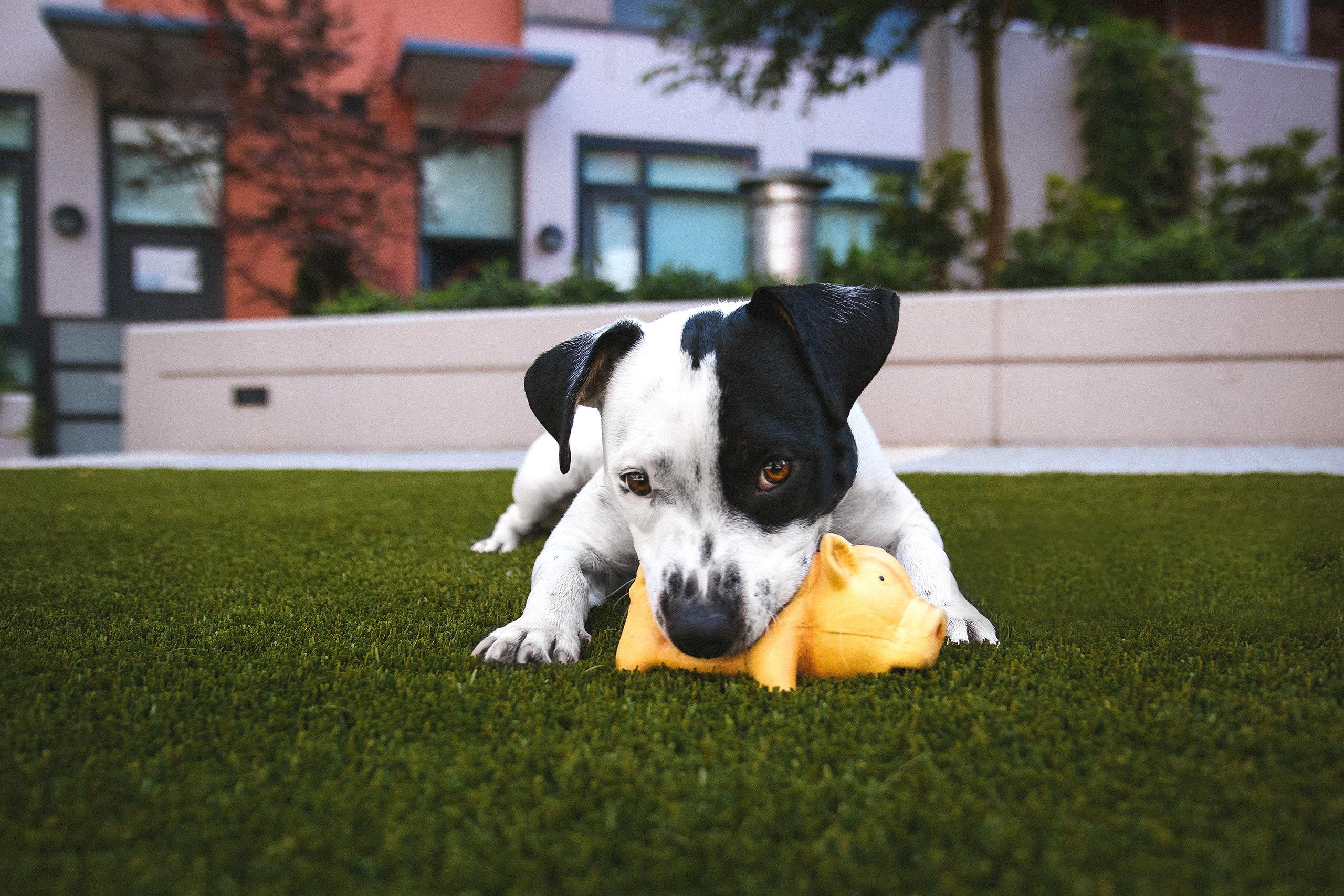 mascota con juguete