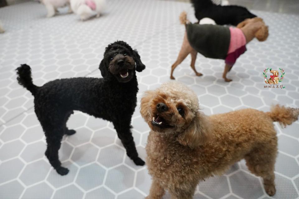 perros felices