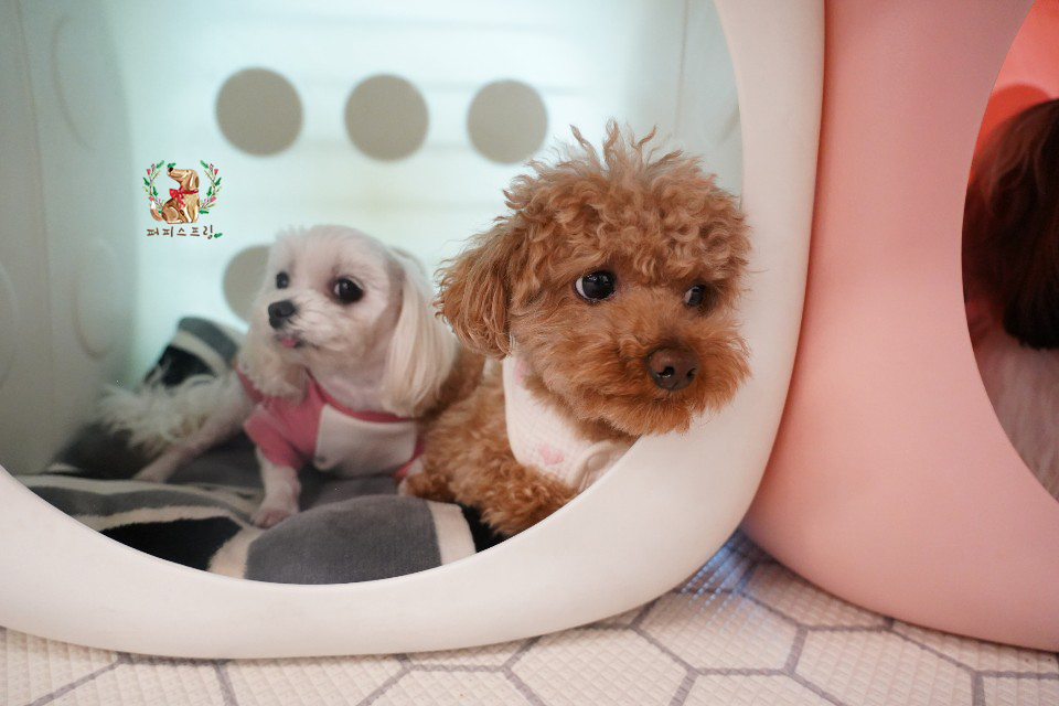 Guardería Puppy Spring