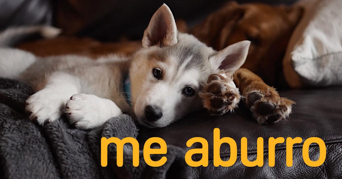 perro-cuarentena