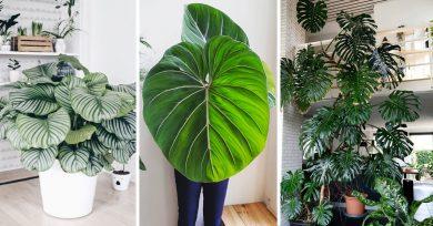 plantas-interior-gigantes