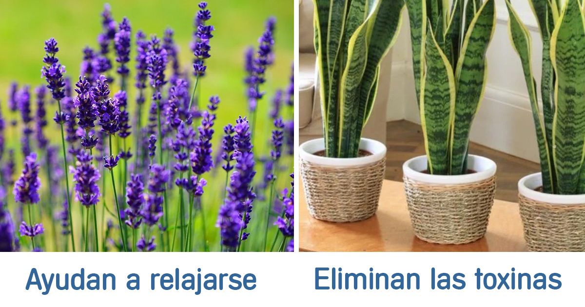 plantas-salud