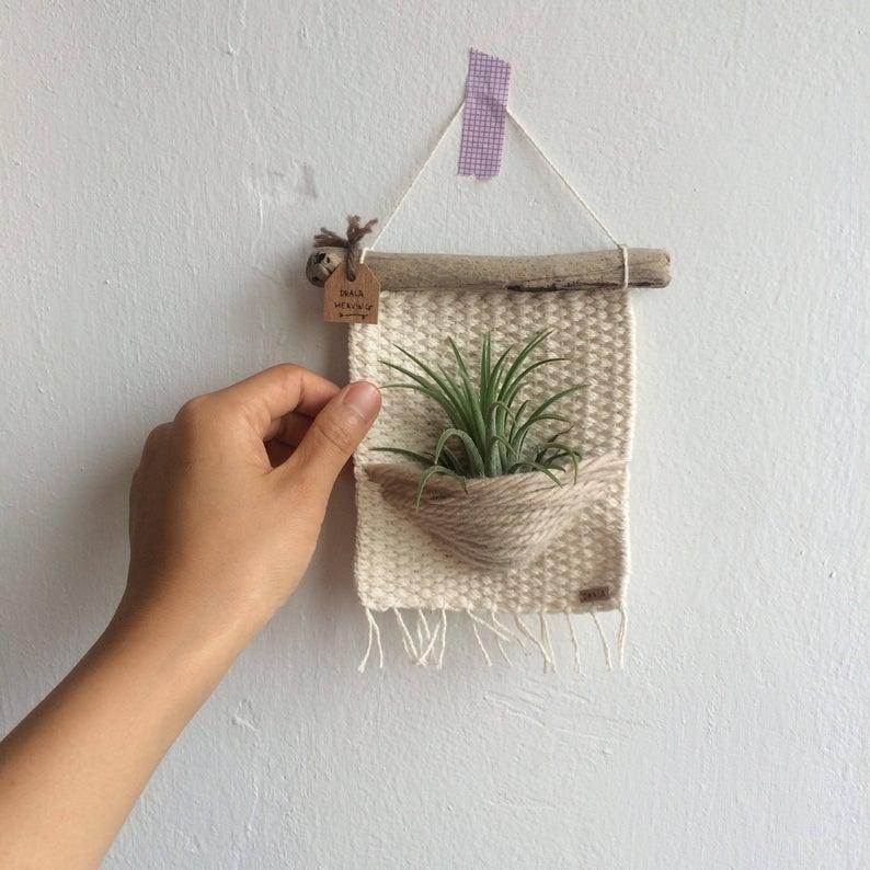 plantas del aire ideas creativas
