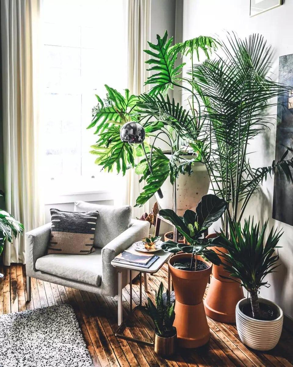 lectura con plantas