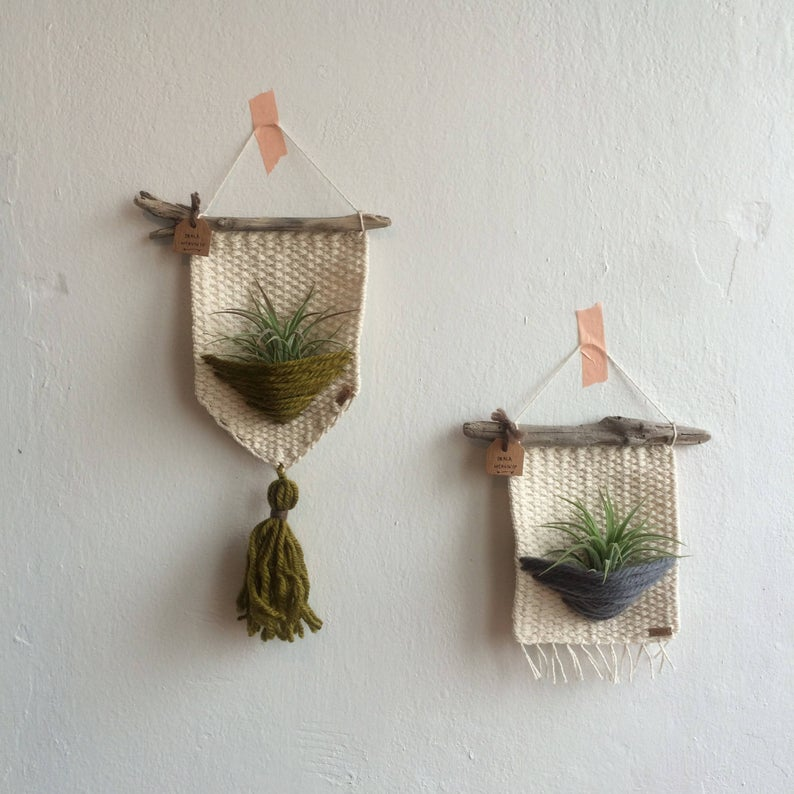 decoraciones plantas del aire
