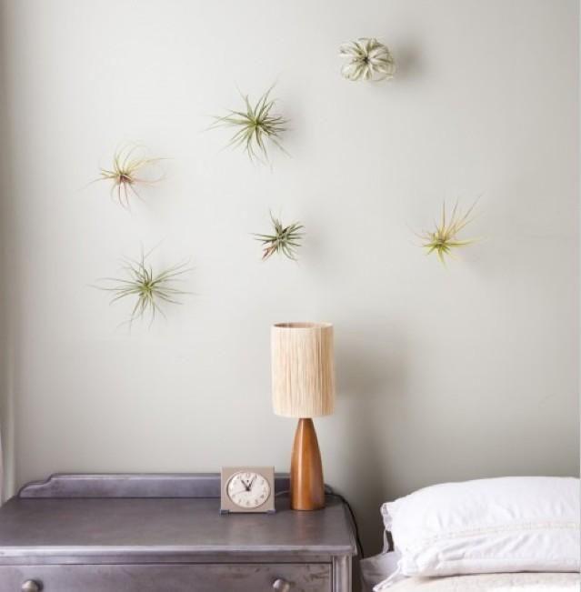 plantas de aire en la pared de casa