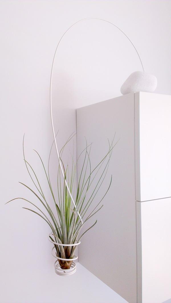 decoraciones con plantas