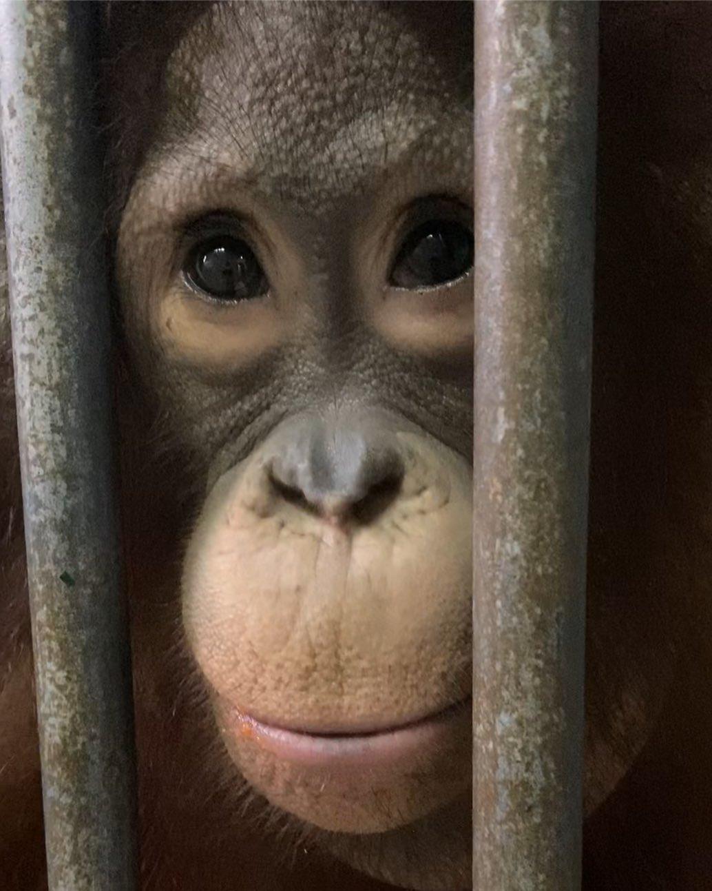 mono encerrado en jaula zoo crueldad animal