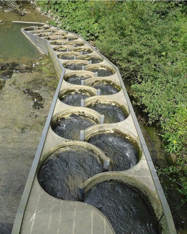 Escaleras para peces