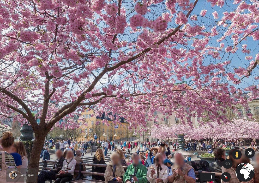 Recorrido virtual cerezos en flor