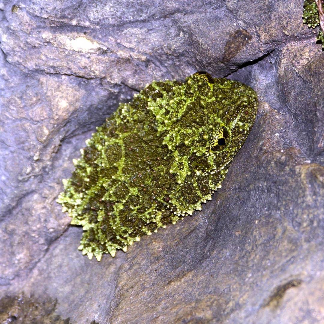 camuflaje de musgo en animales