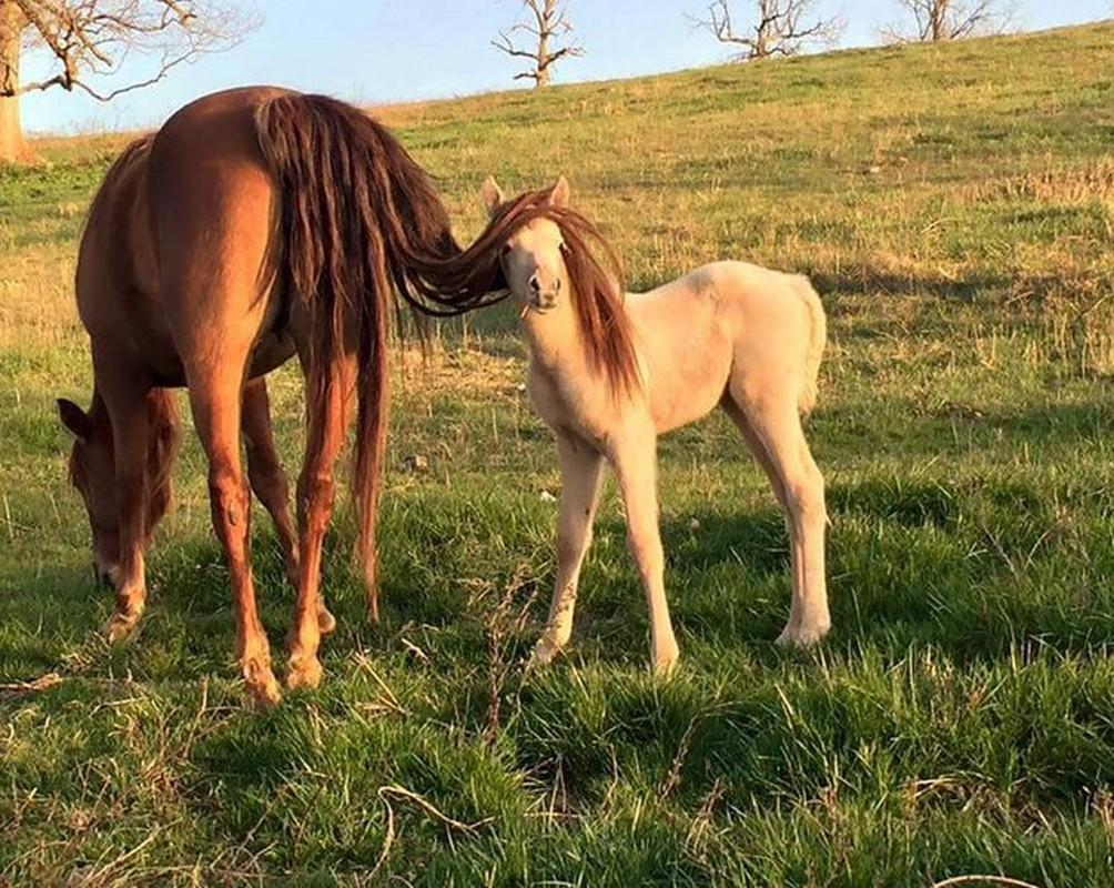 caballo cría caballito