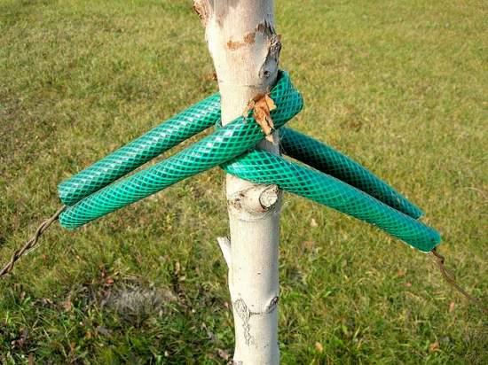 soporte de árboles