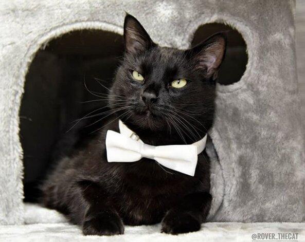 gato disfraces