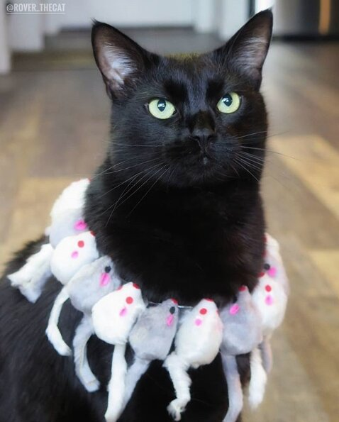gato disfraces 2