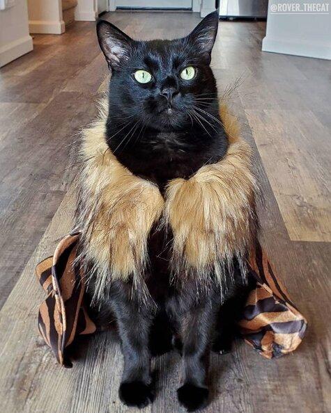 gato disfraz