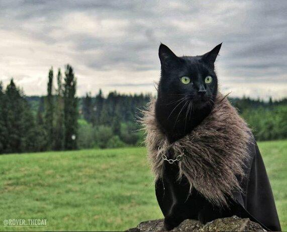 gato juego tronos