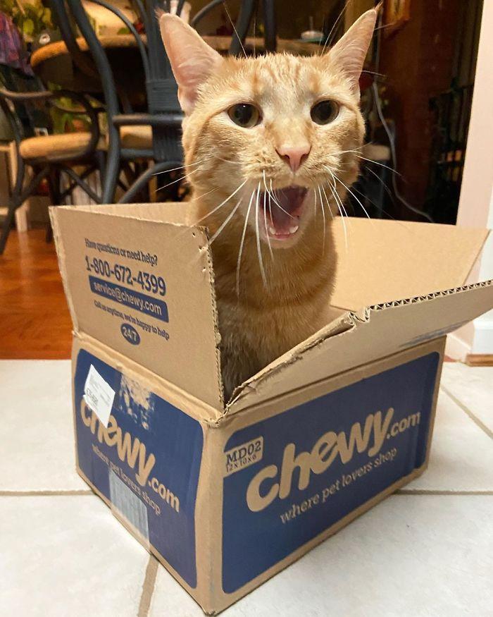 gato viral por meter pata en la nevera