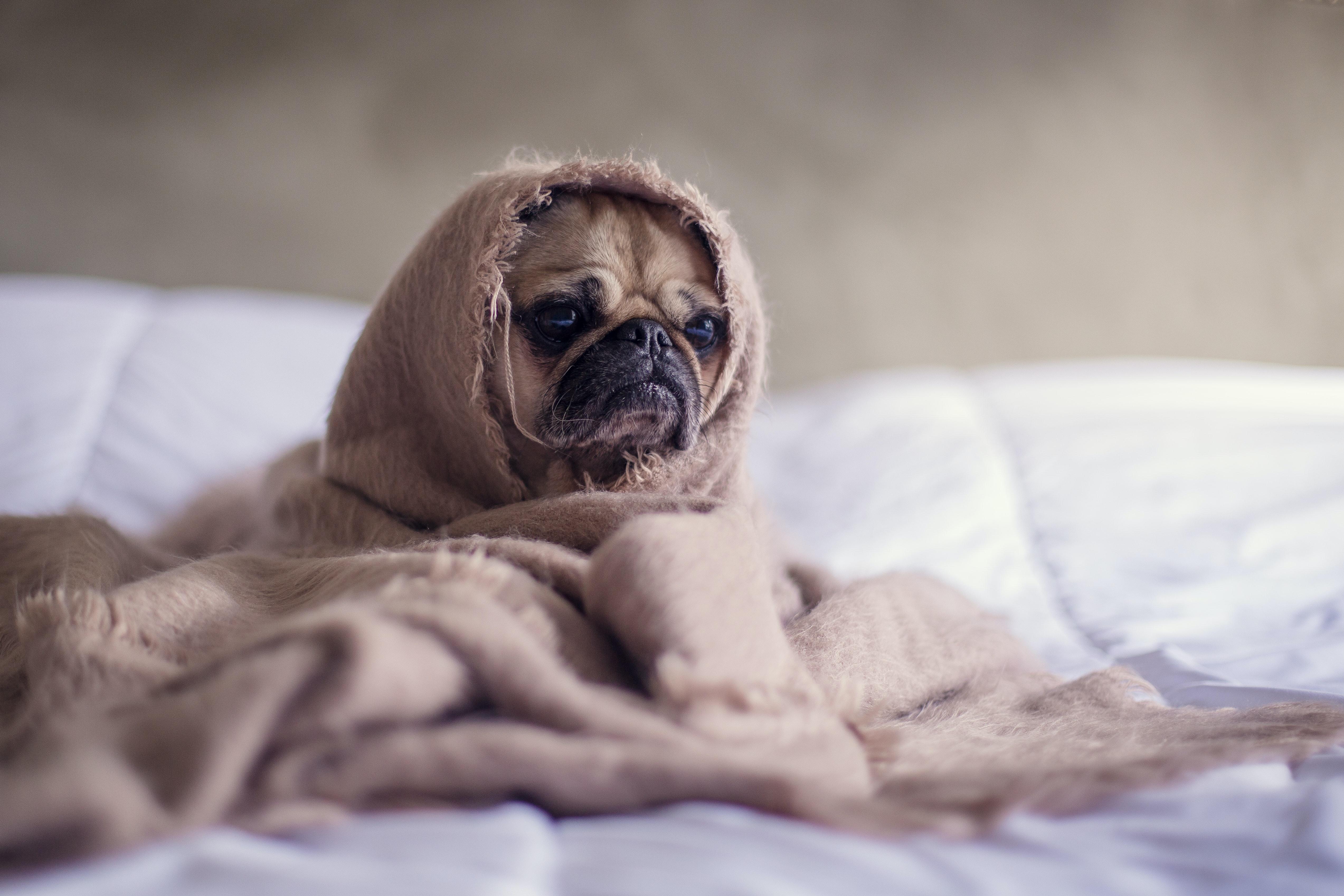 perro triste con manta