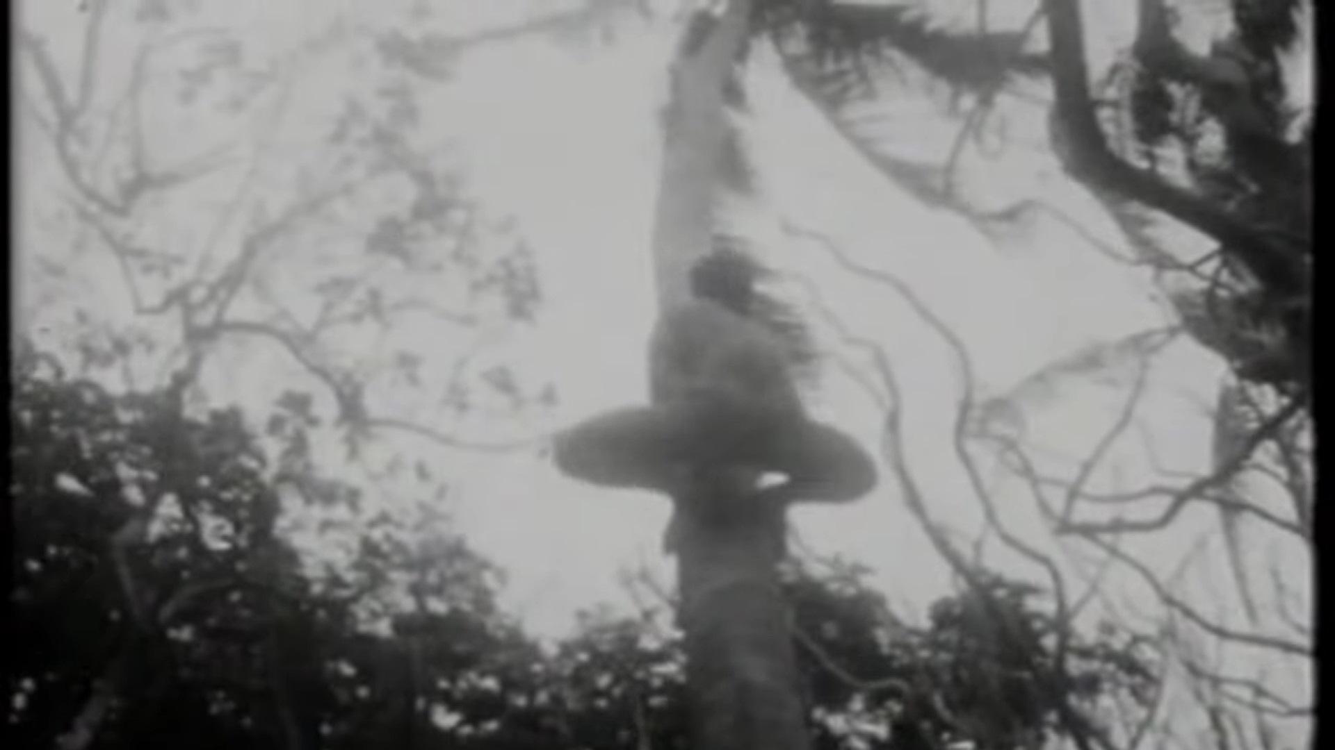 hombre trepando palmera