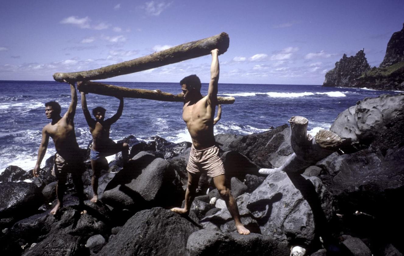 chicos en playa troncos