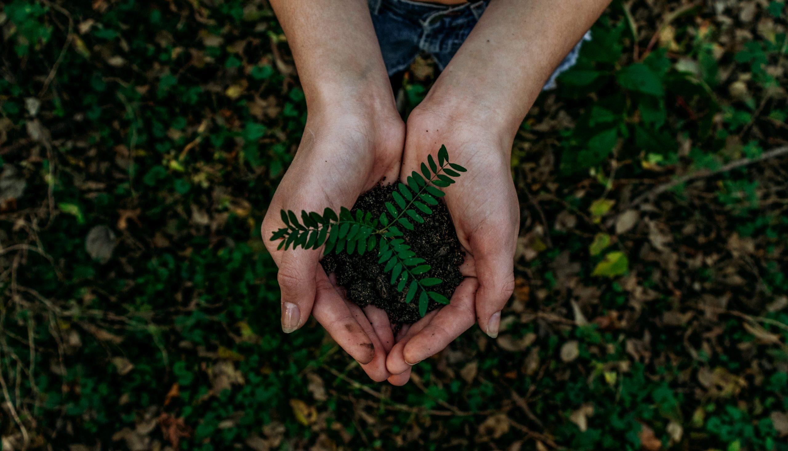 reciclar ecología