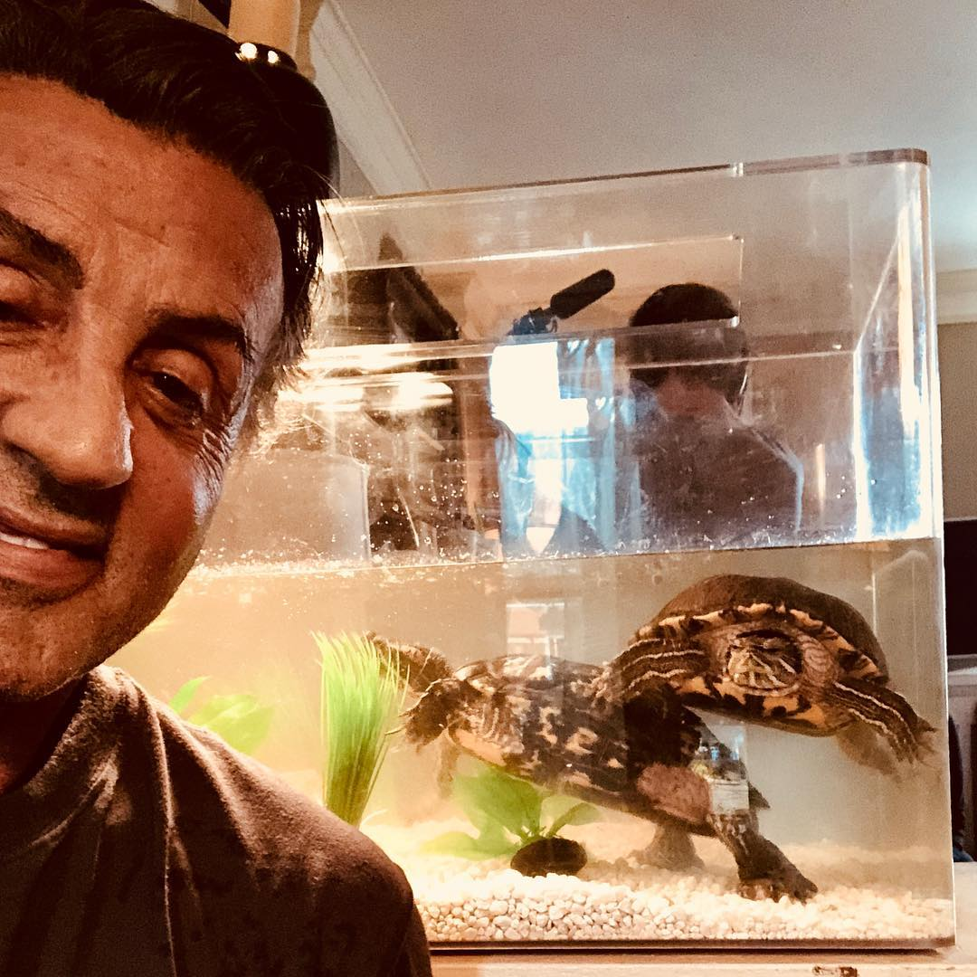 sylvester stallone tortugas