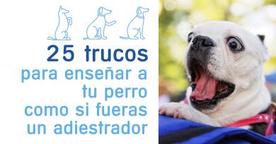 trucos-adiestrar-perros