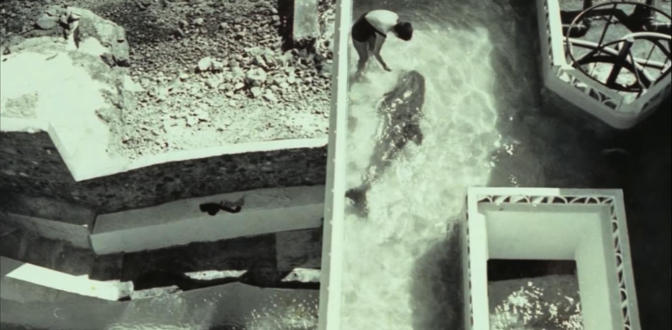 experimentos cientificos con delfines
