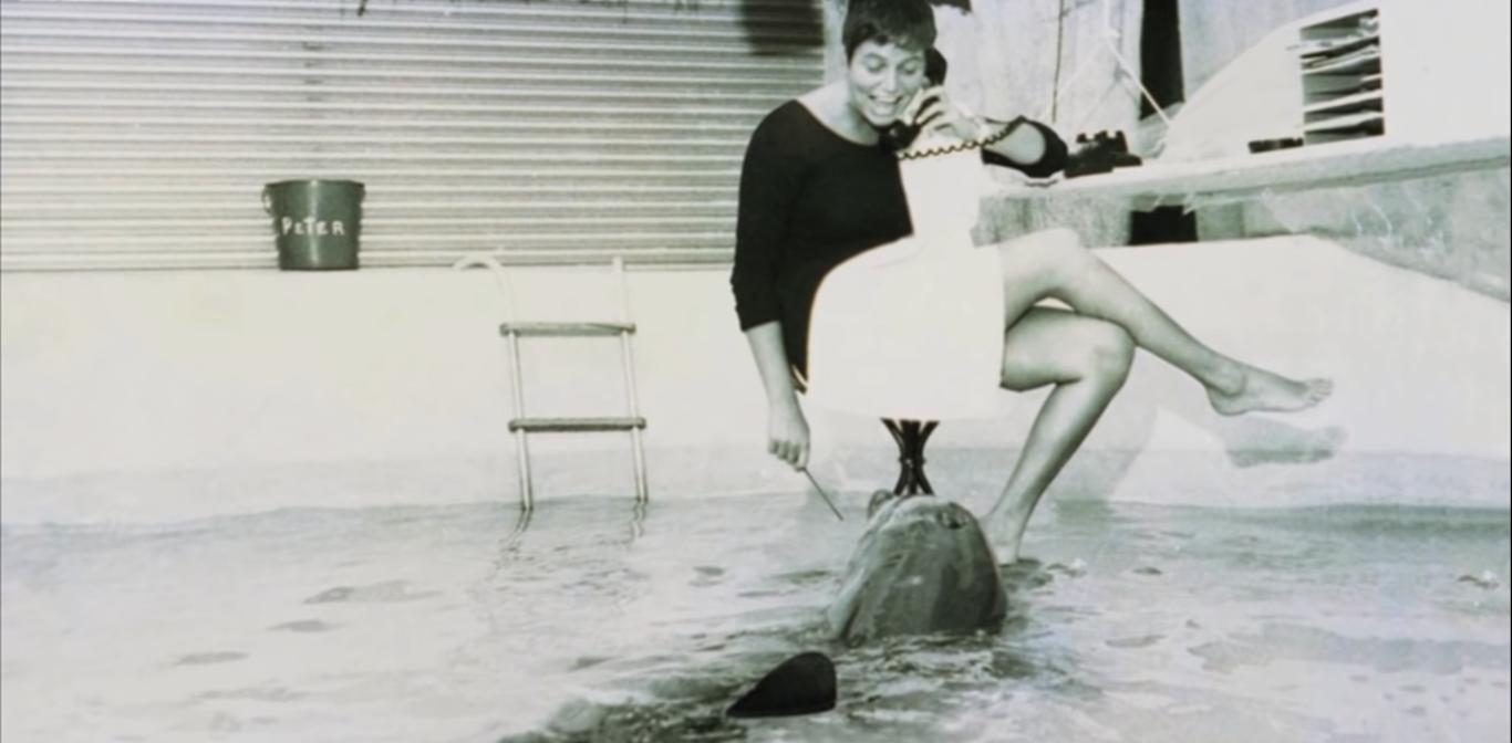margaret howe lovatt delfín