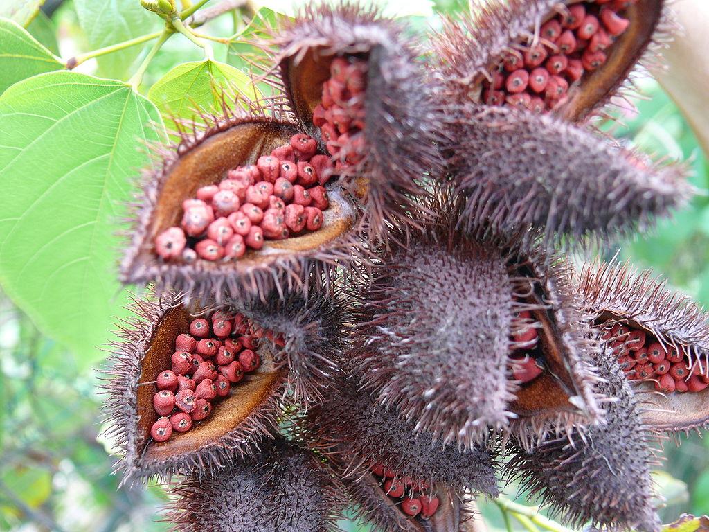 achiote-semillas