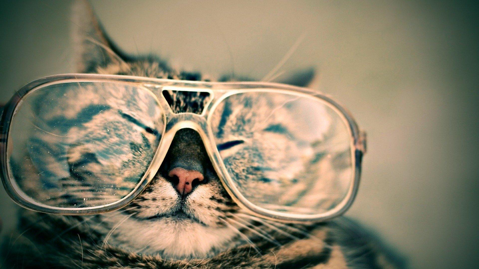 gato-con-gafas