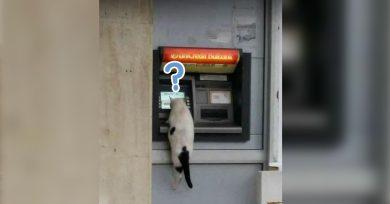 soluciones-gatos