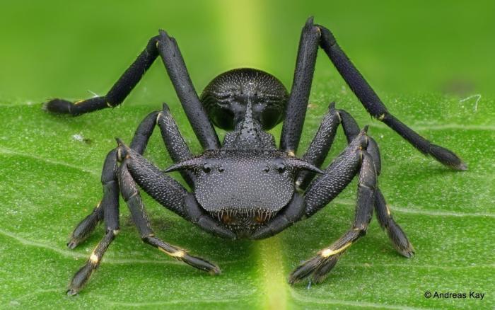 hormiga o araña