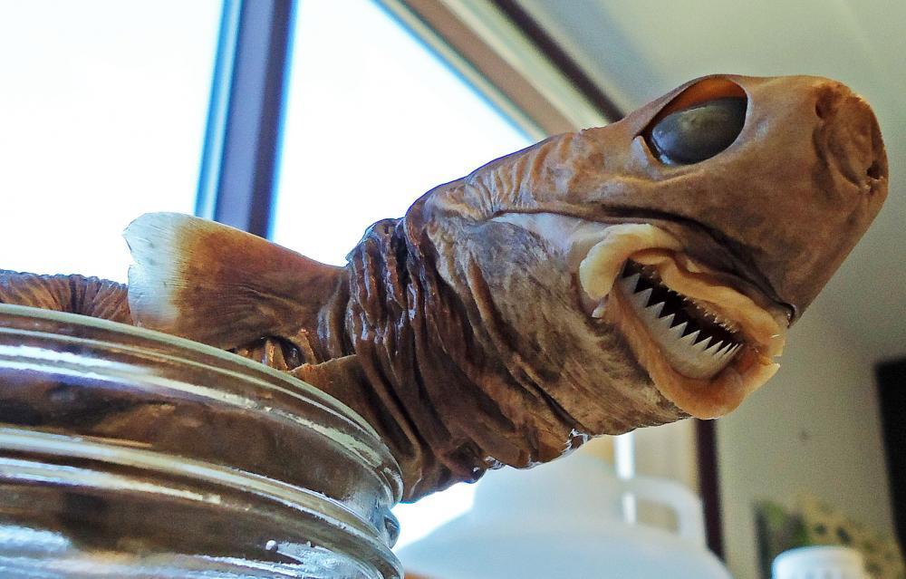 tiburón cortador de galleta
