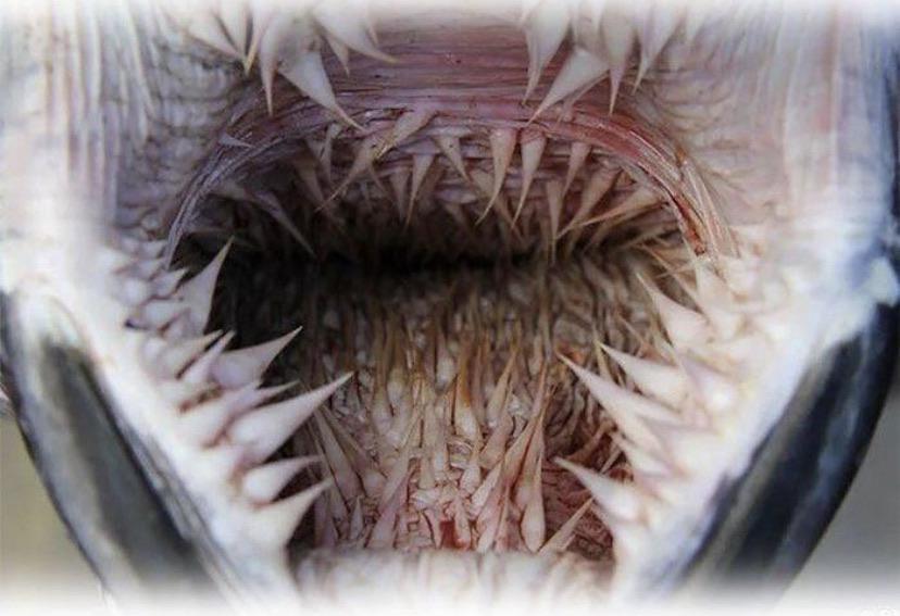bocas de animales tortuga laúd