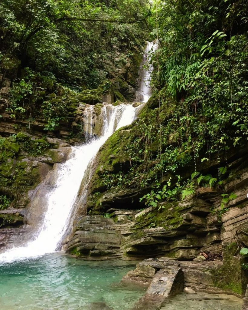 Catarata selva